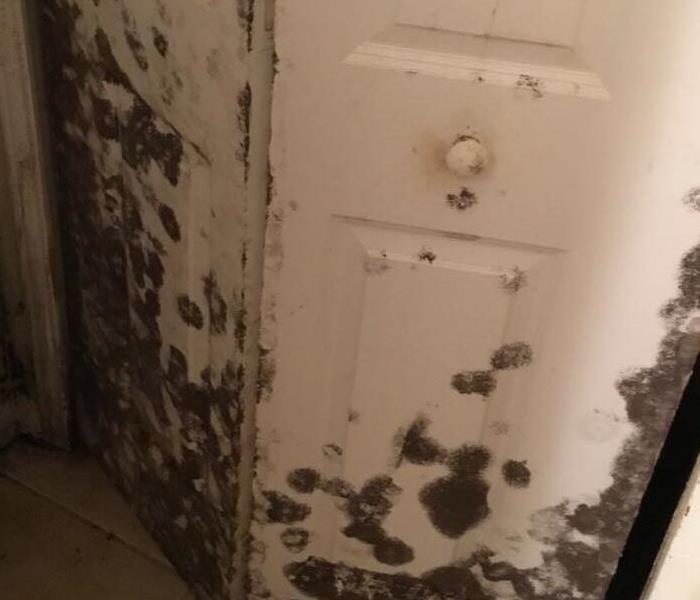 Closet door has significant mold growing on the exterior