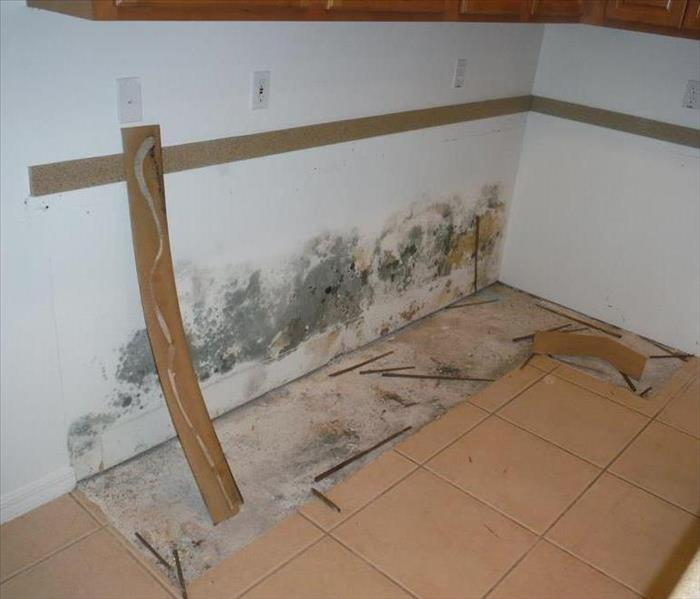 Mold Remediation Does Your Bonita Springs Home Have A Mold Problem