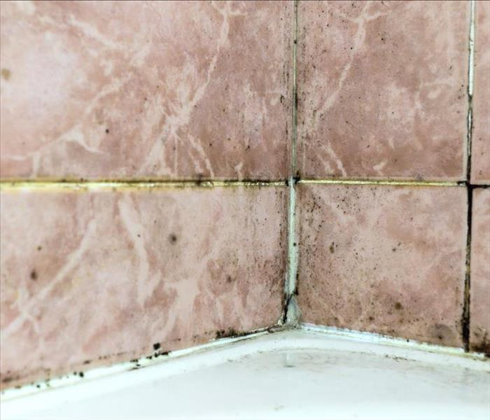 Mold tile joints with fungus due to condensation moisture problem